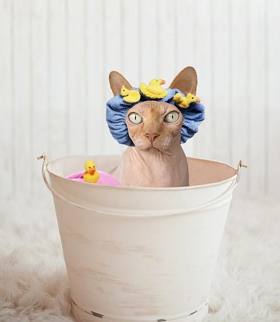 kat wassen